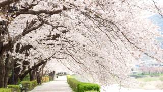 50歳からの大人の旅行【実践伊豆旅行編】